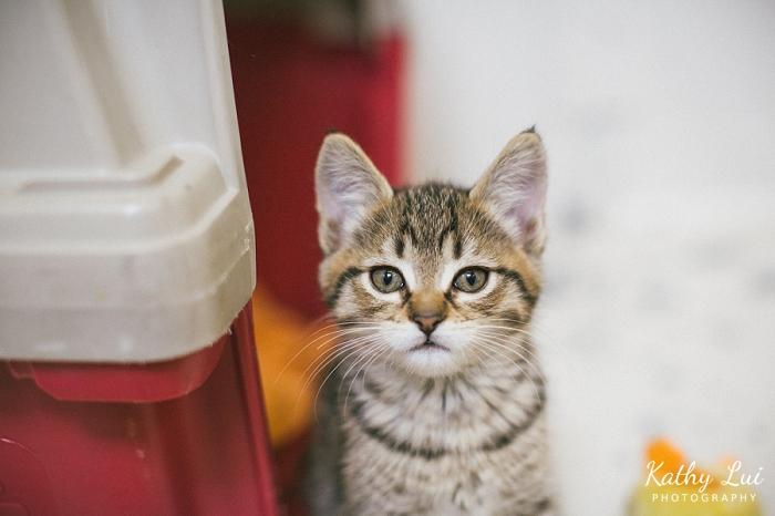 newwestminster-kitten-shelter-photography002